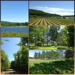 Domaine forestier