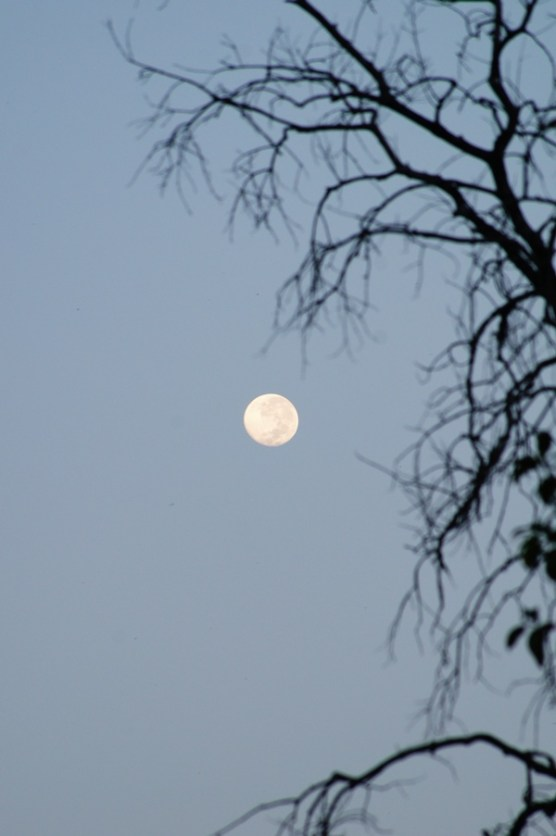 moon and the dead branch 2