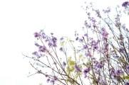 like a sakura #2