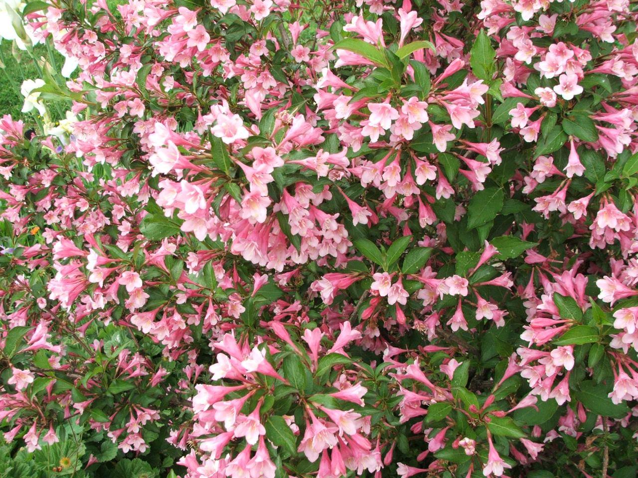 cvjetanje trešnje datira samceweb stranice za upoznavanje arapski