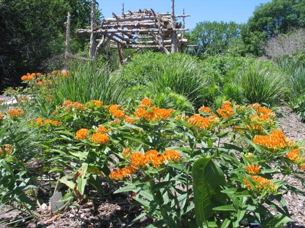design native plant garden