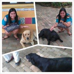 Cute dogs at Sonya's Garden