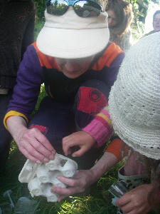 Sally Hall helping to identify the moths