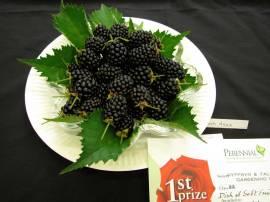 mummmm - berries