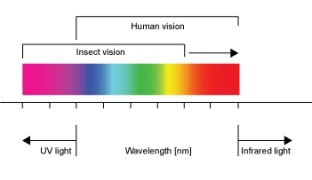 Color-vision
