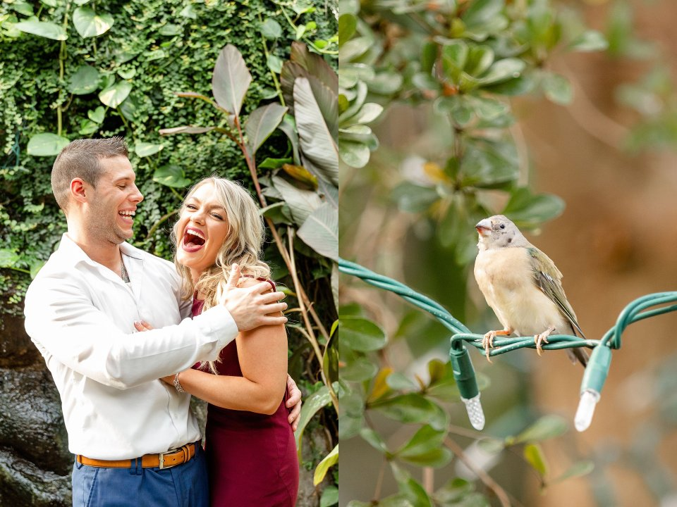 Engaged couple laughing and a little bird watching