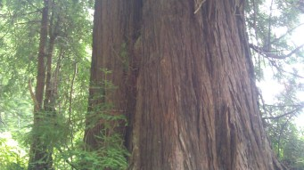 Hiking the West Coast Redwoods California