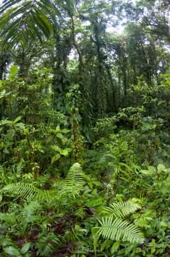 Virgin rainforest (Yellow River camp)