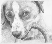 draw dogs online