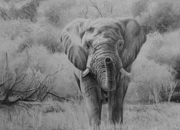 Draw Elephant Online Art Lessons