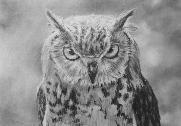 Draw Owl Online Art Lessons