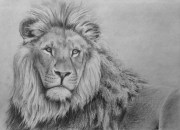 draw lion in pencil