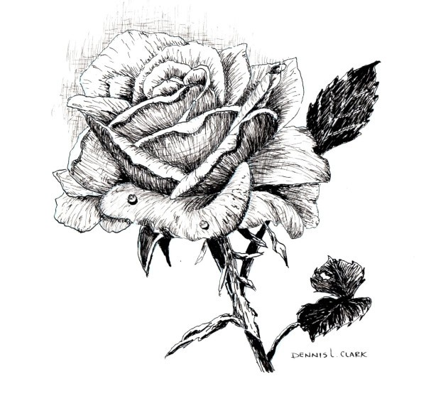 How to Draw a Rose in Pen and Ink — Online Art Lessons