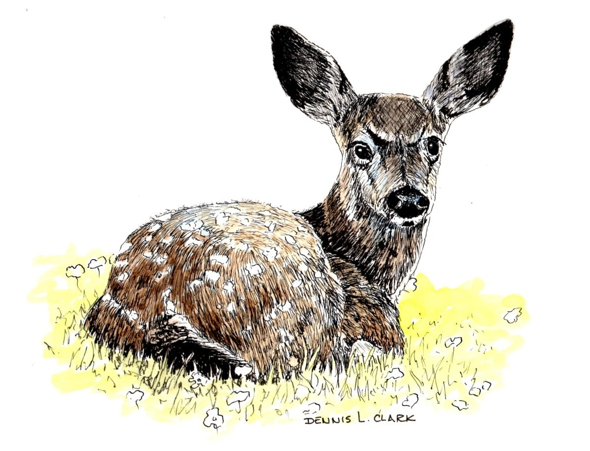 How To Draw Bambi In Pen And Ink