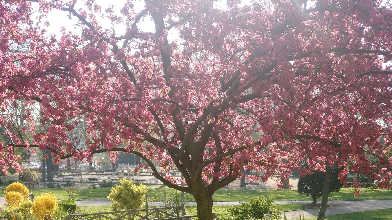 A tree in a park