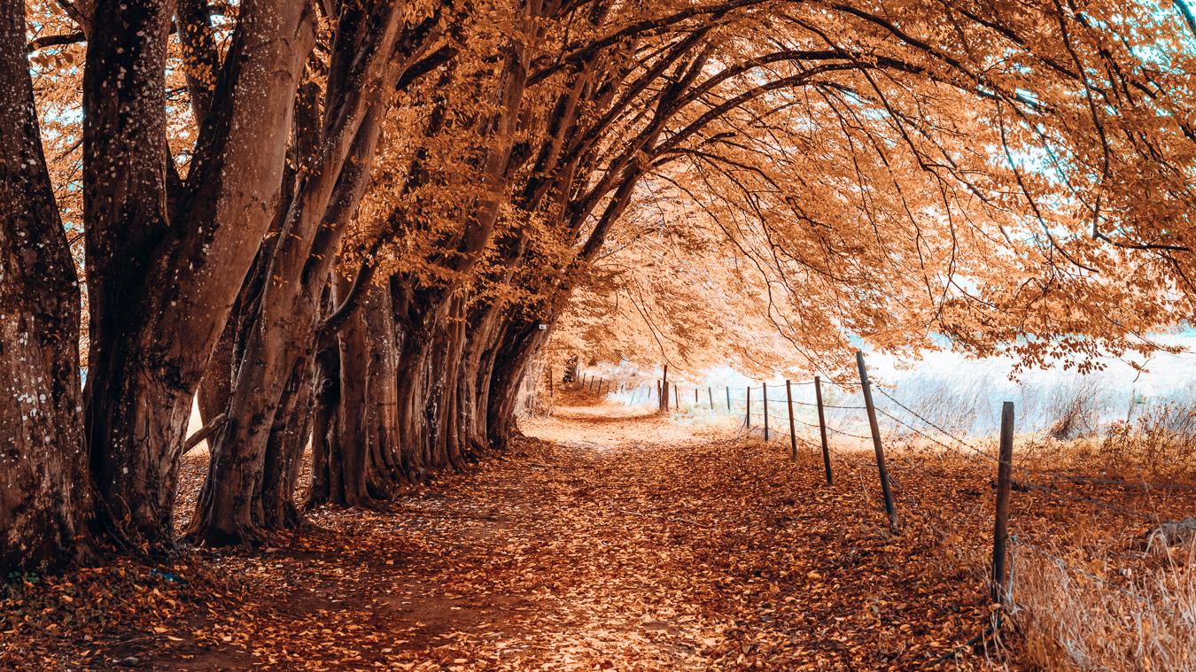 Fall in Belgium