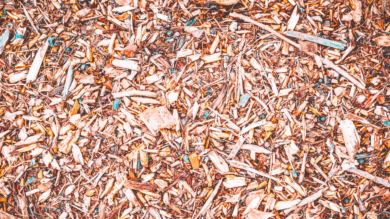 Leaves in Leuven