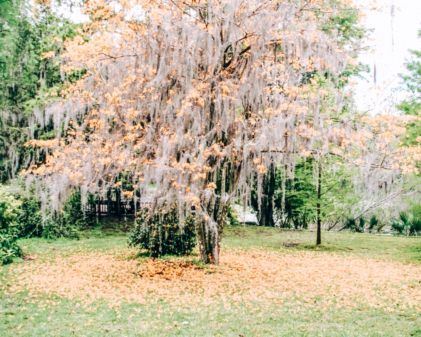 Harry P Leu Gardens in Orlando