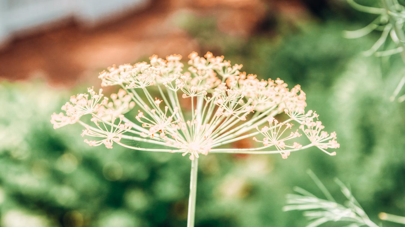 Flower at Harry P Leu Gardens