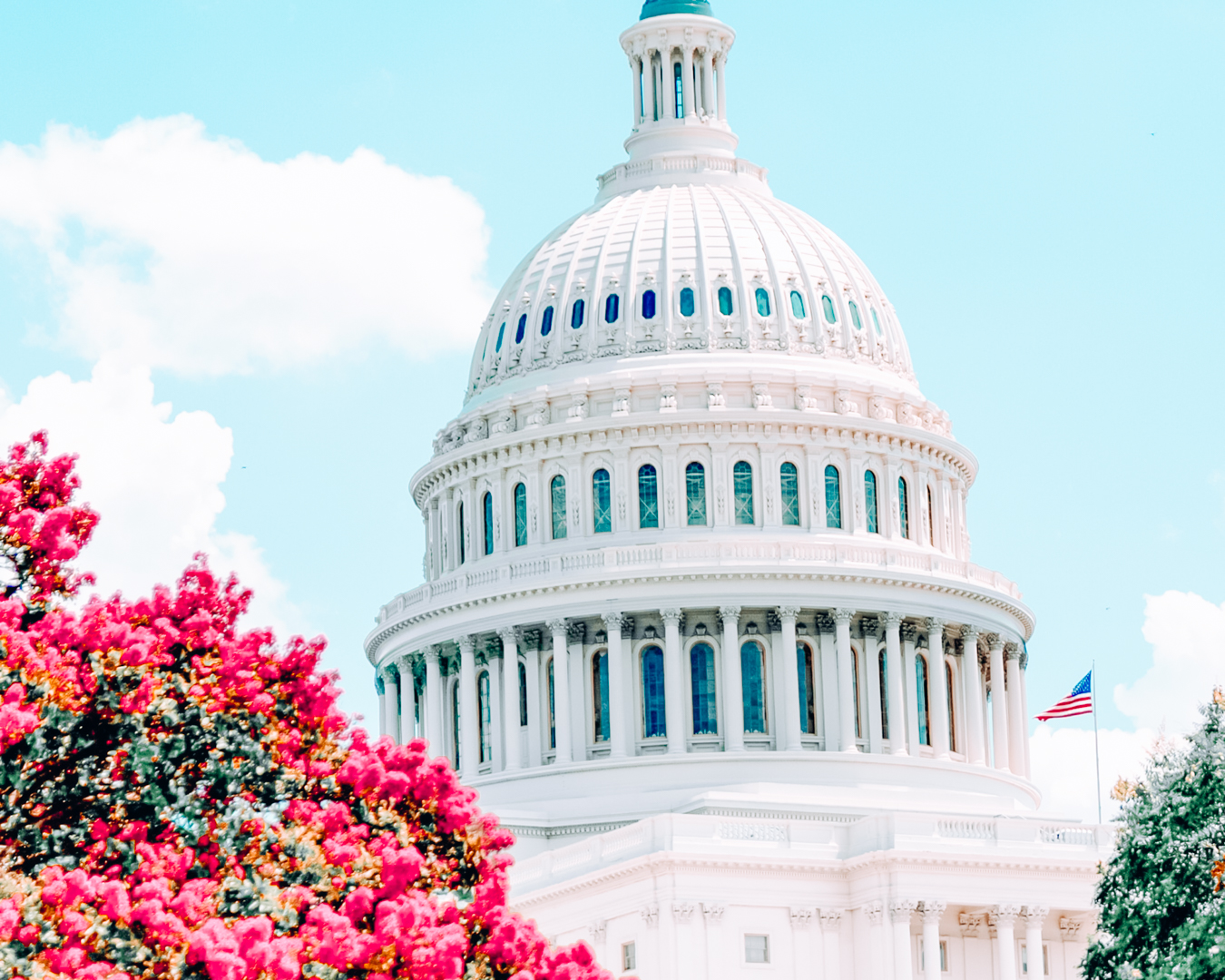The Capitol and flowers