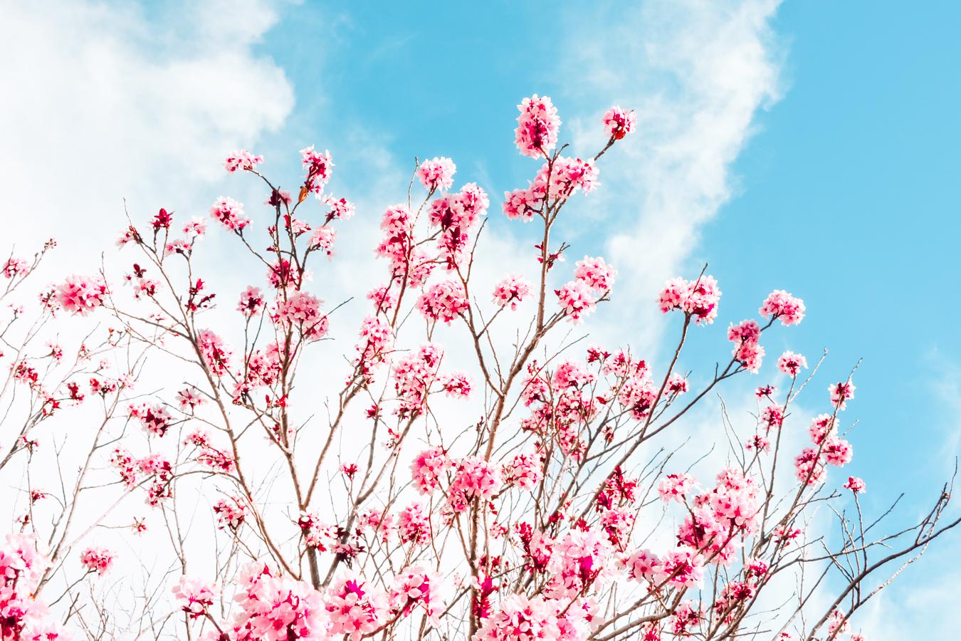 Pink flowers in Albuquerque