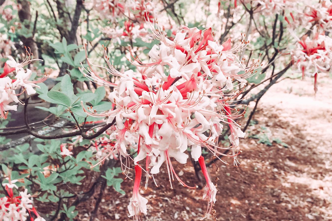 Flowers at the Cheekwood Botanical Gardens