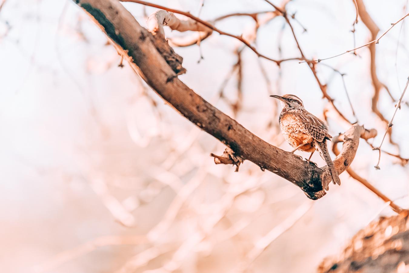 Bird in Desert Botanical Garden