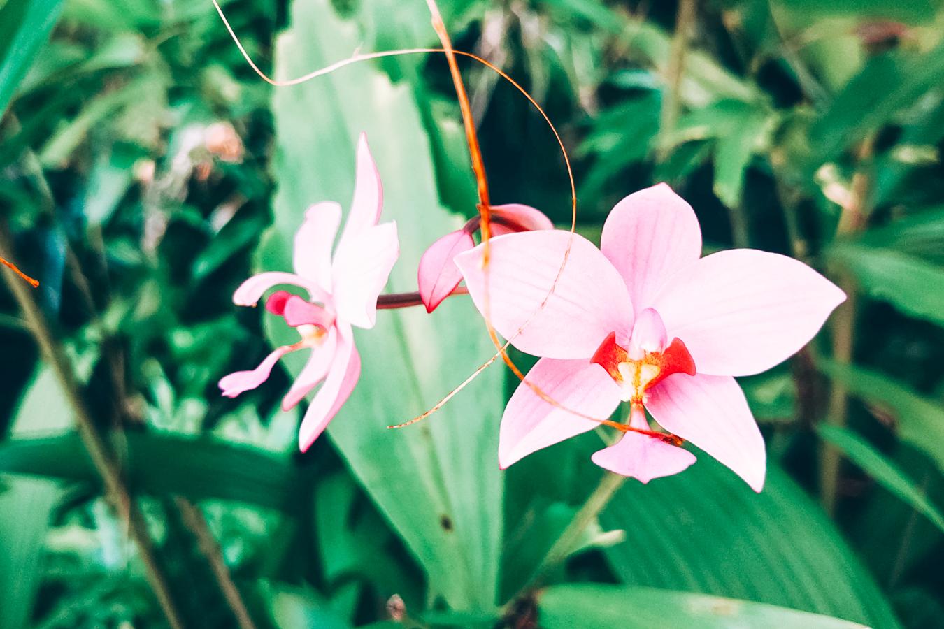 Flowers at the Fairchild Tropical Botanic Garden