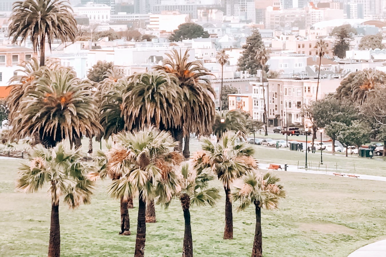 Palm Trees in Mission Dolores Park