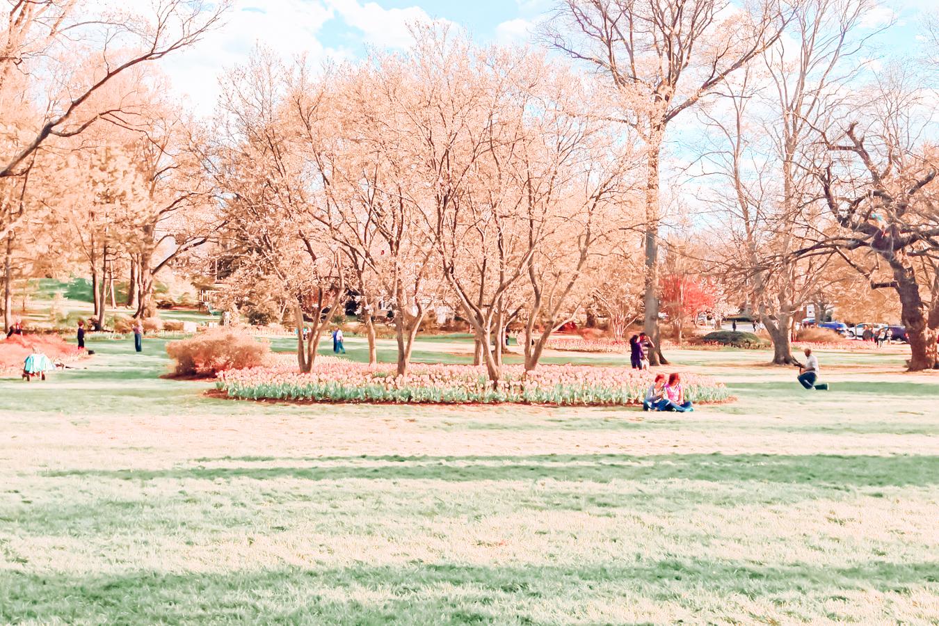 The Sherwood Gardens