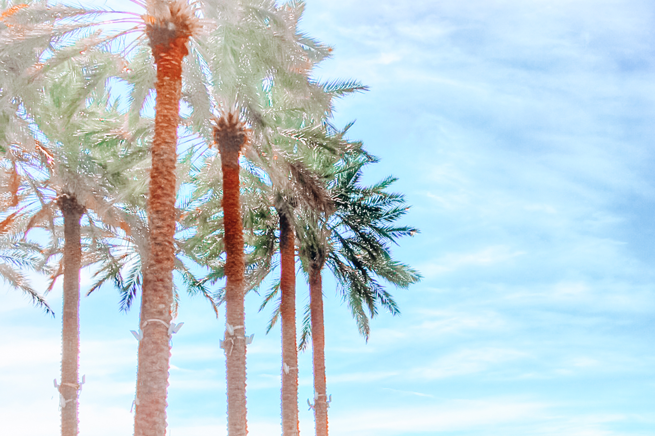 Palm trees and a blue sky in Tampa