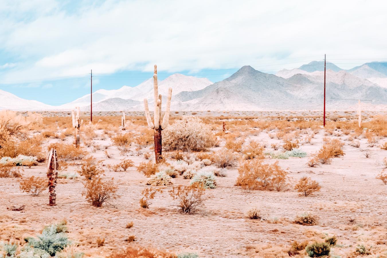 Nature in Arizona