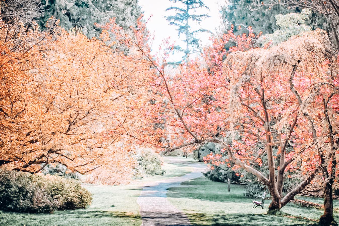 Nature at the arboretum in Seattle