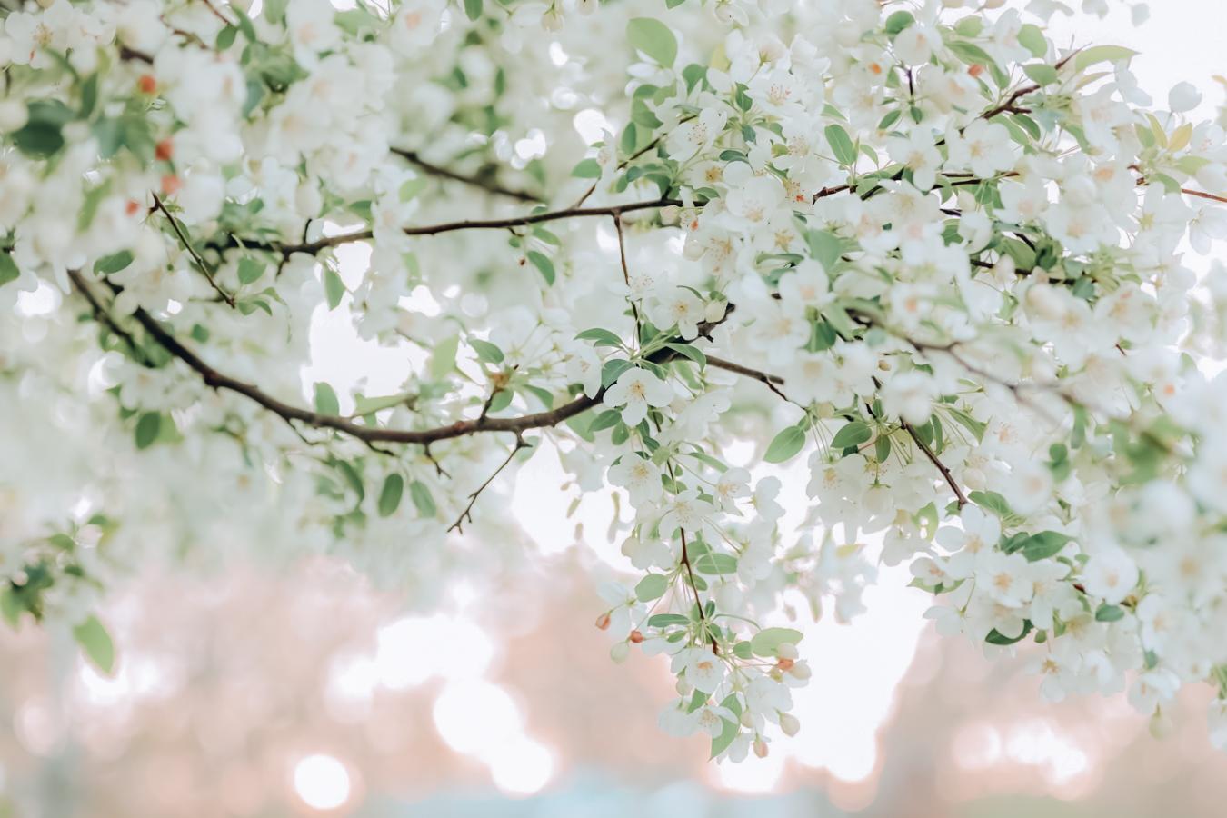 Flowers at the Arnold Arboretum