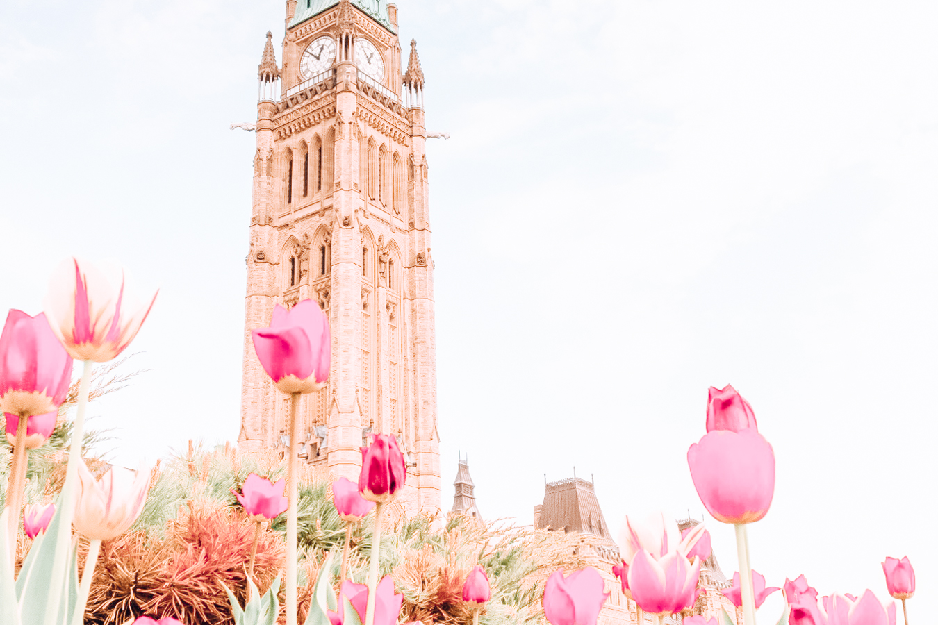 Building and flowers in Ottawa