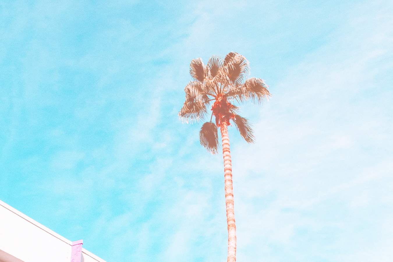 Instagrammable palm tree at Saguaro Palm Springs
