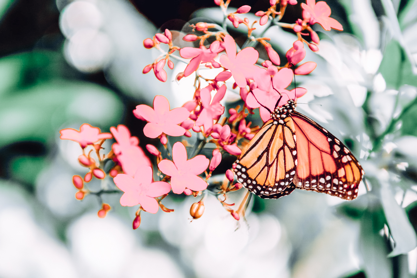 Flowers and butterfly at the Phipps Conservatory and Botanical Gardens