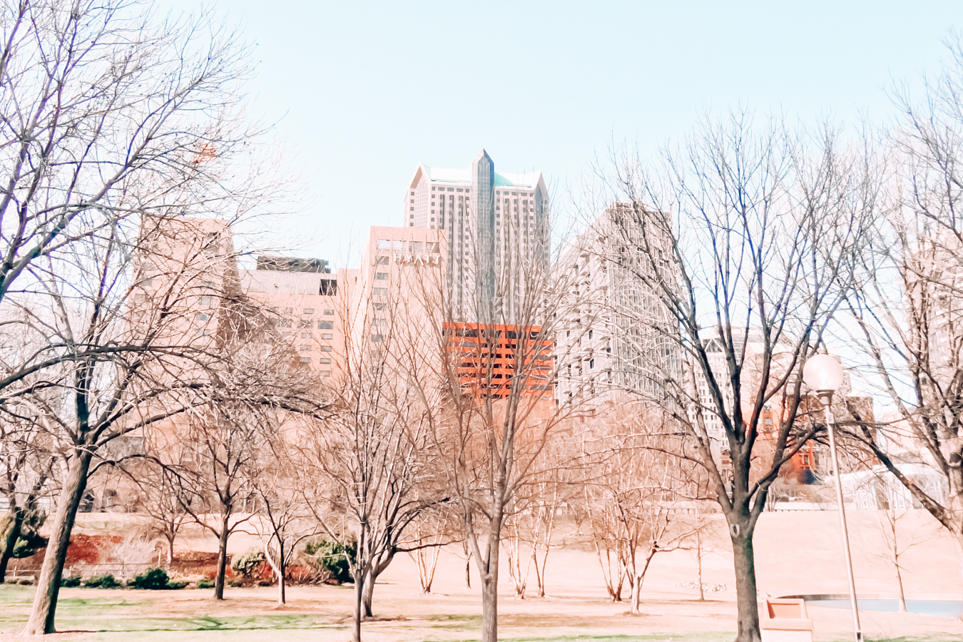 Buildings and trees in St. Louis