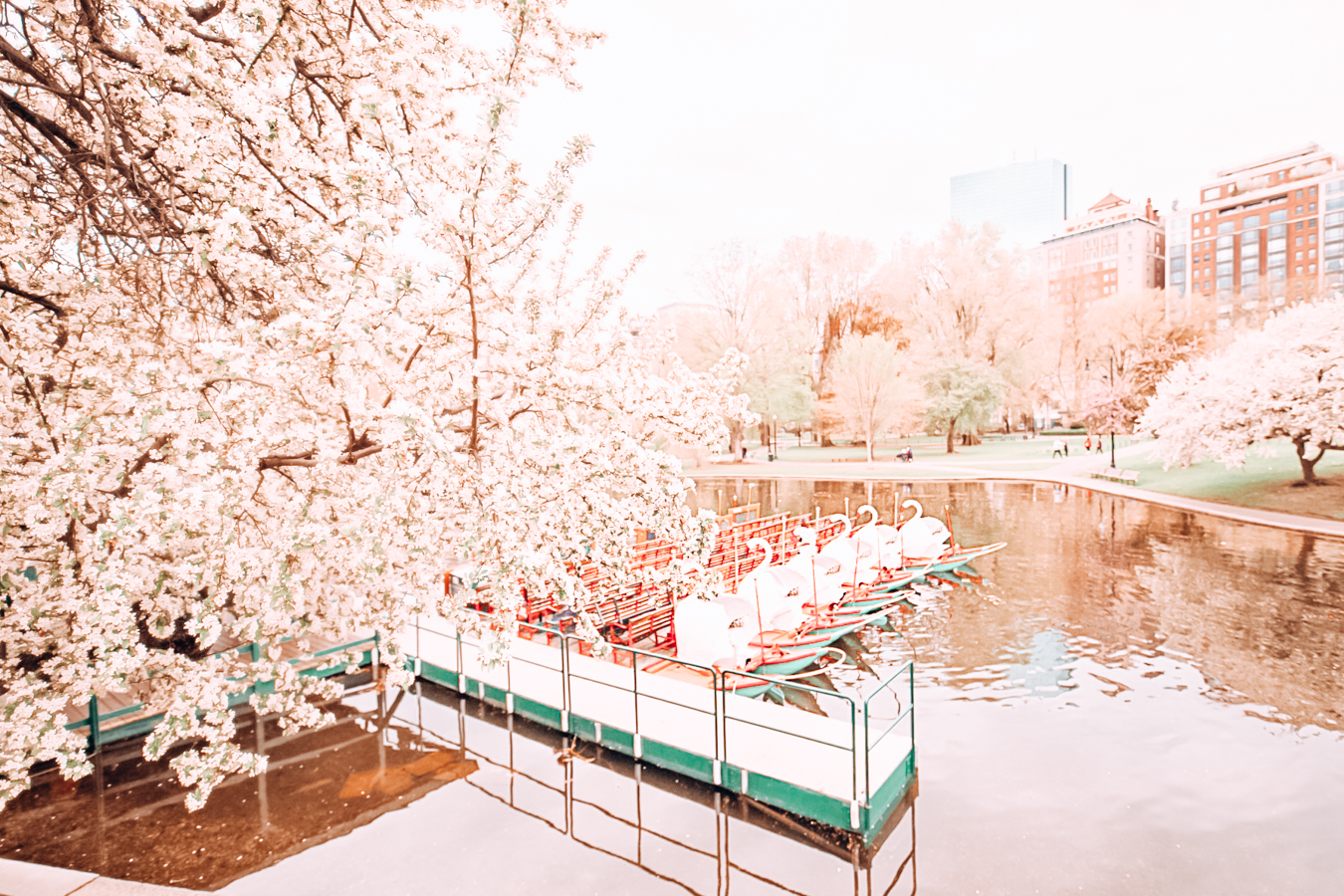 Nature and swan boats