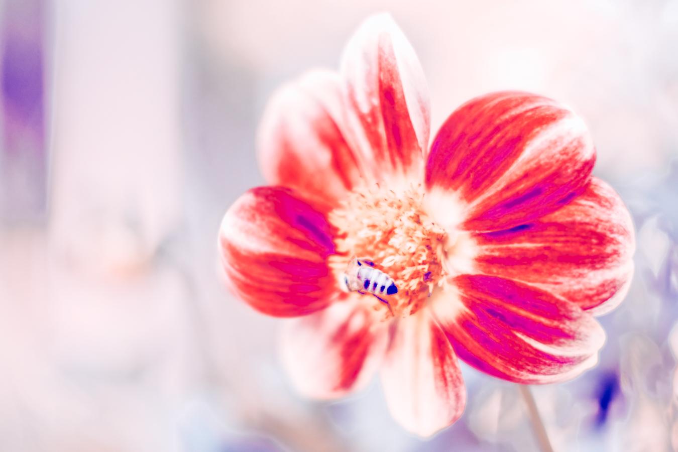 Flower at the Adelaide Botanic Garden