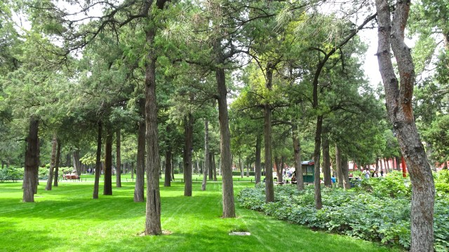 Conifers and lawns in the park; DSC00168 © DY of jtdytravels