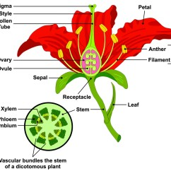 Cross Pollination Diagram For Kids Ecm Wiring Flower Parts And Functions Dyna Gro