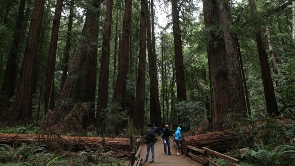 A hiker was killed in Muir Woods National Monument after a redwood tree collapsed