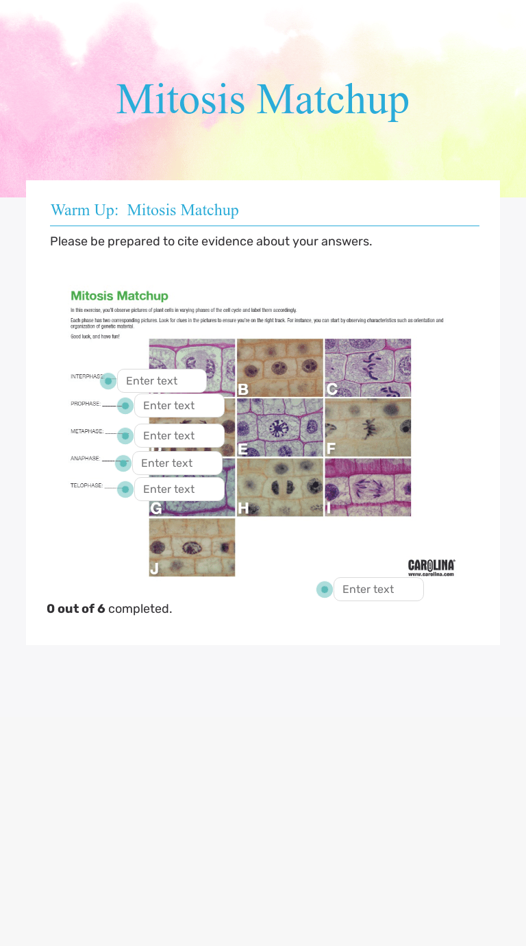 hight resolution of Mitosis Matchup   Interactive Worksheet by Neotha Williams   Wizer.me