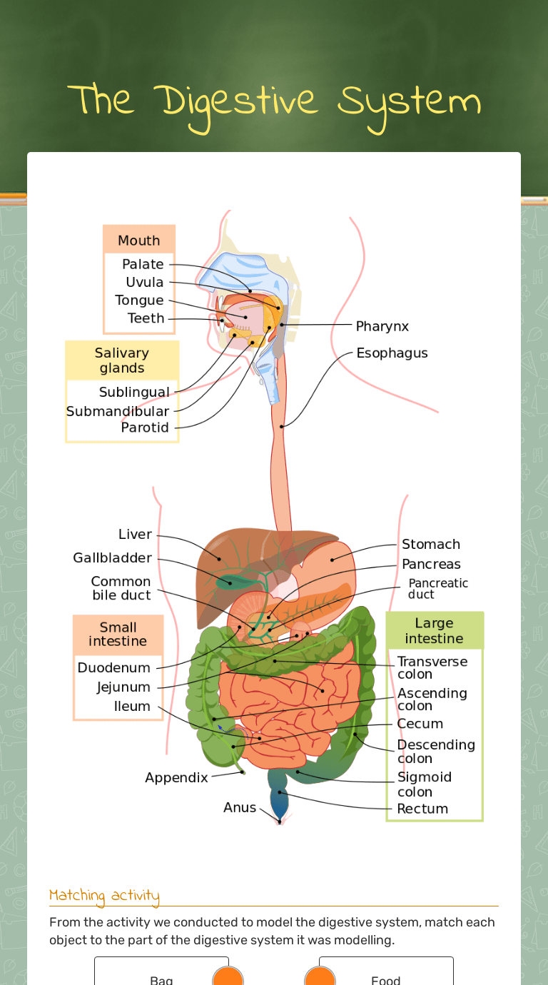 The Digestive System   Interactive Worksheet by Kelly Hollis   Wizer.me [ 1380 x 768 Pixel ]