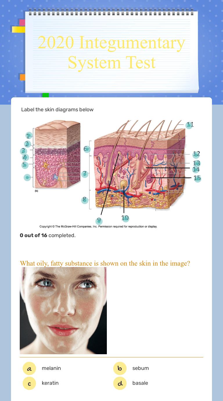 hight resolution of nail skin diagram