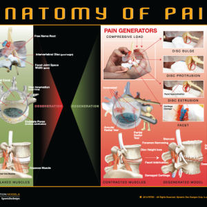 Anatomy of Pain Poster