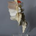 Single Stand for Multilevel spine model