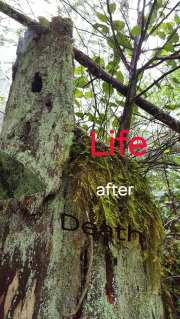 Life after death - regeneration of degenerated discs?