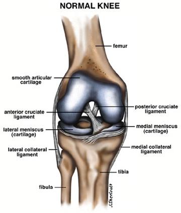 full human leg tendons diagram arlec sensor light wiring acl tears | pinnacle orthopaedics